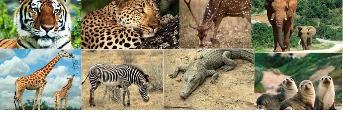 Wilde dieren huiden
